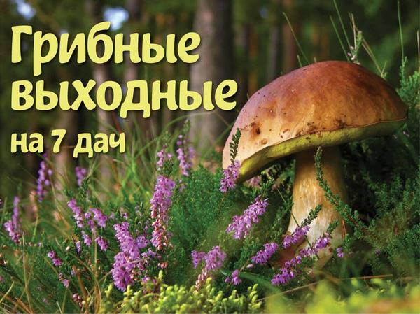 На 7дач - грибные выходные!