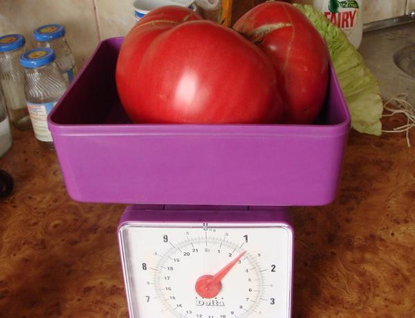 «Самый крупный помидор» – 2 место  –  Алымова Ирина, Орловская область