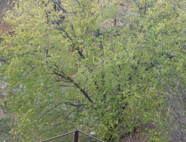 Вот это во дворе у нашей Анатольевны, мне удобно щелкнуть с балкона))) Сегодня, 5 мин. назад