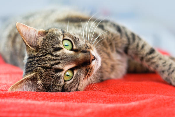 На 7 дач - выходные с любимыми кошками и котами