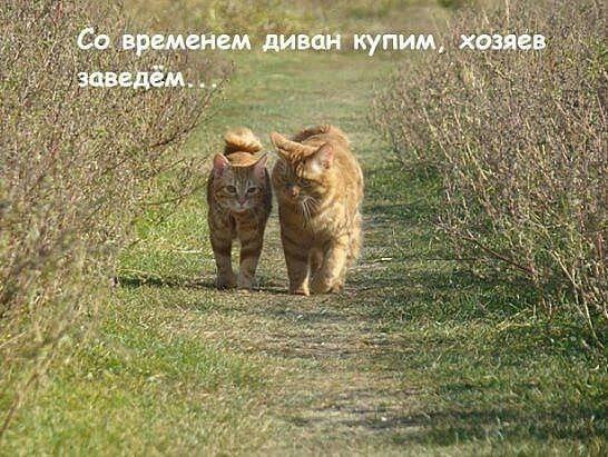 Да.... хозяев заведем)))