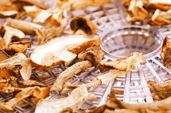сушка грибов в электросушилке
