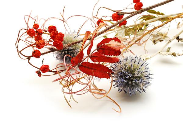 Некоторые растения, высыхая, отлично сохраняют природную форму и даже цвет