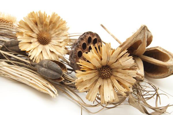 Не всегда удается сохранить цвет растений - многие из них даже при правильной сушке обесцвечиваются