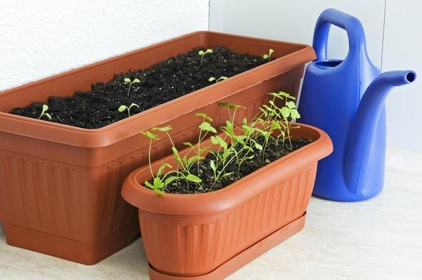 Высеивайте семена неглубоко, не более, чем на 0,5 см