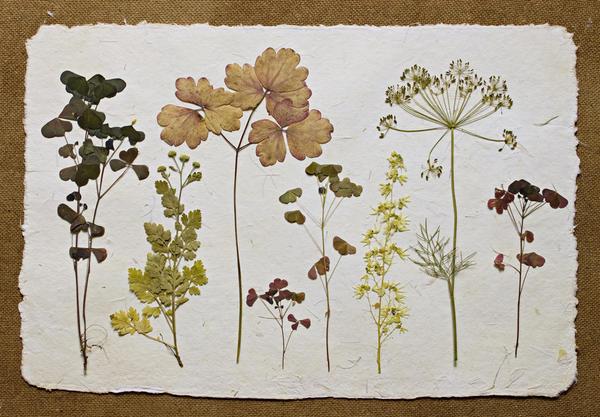 Композиция в стиле старинного гербария