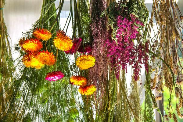 Нужно позаботиться о том, чтобы растения не потеряли при сушке ни форму, ни цвет