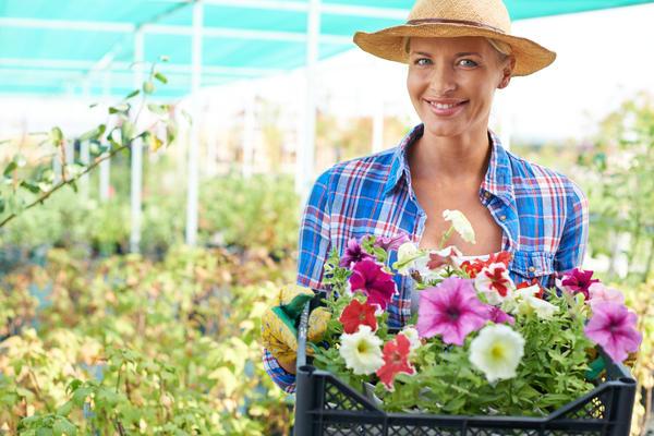 Можно выращивать посадочный материал самим