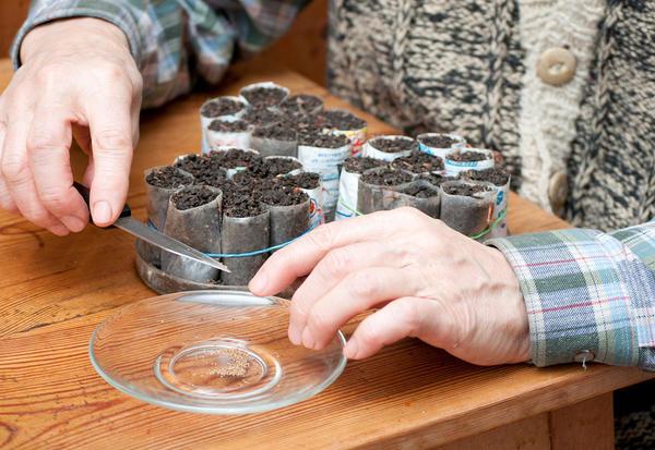 Существуют различные способы подготовки семян к посеву
