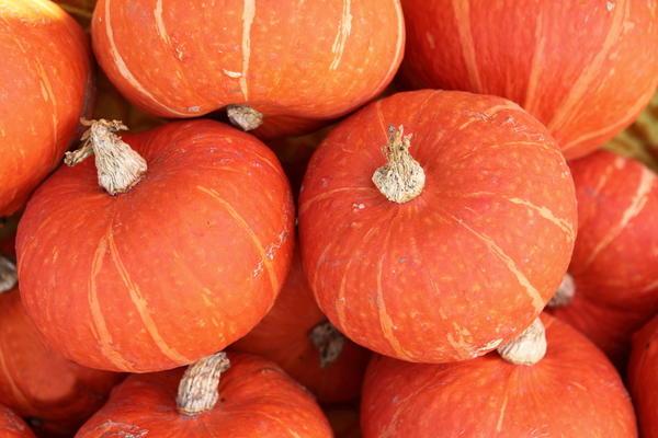 Тыквы сорта Апельсинка