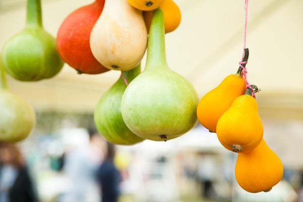 Убрать декоративную тыкву нужно до первых заморозков: поврежденные морозом плоды храниться не будут