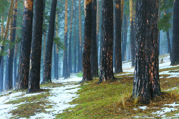 С 1971 года в День весеннего равноденствия в Северном полушарии отмечается Международный день леса