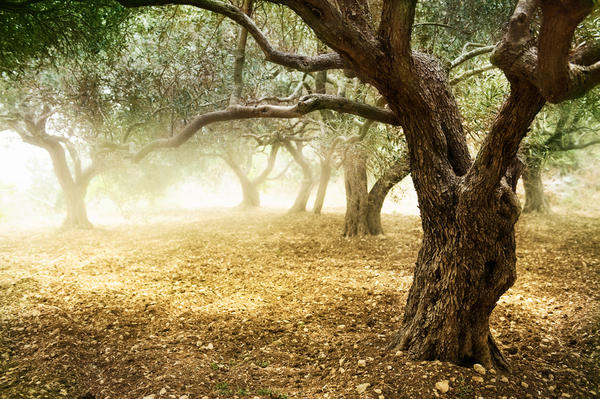 Казнить или помиловать? Решаем судьбу старого сада