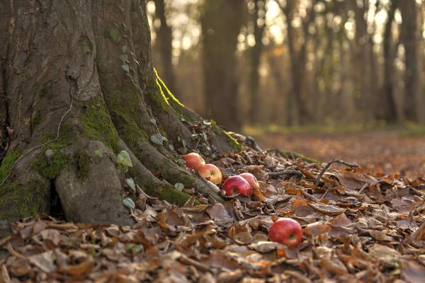 Спилить и выкорчевать старые деревья - довольно затратное мероприятие