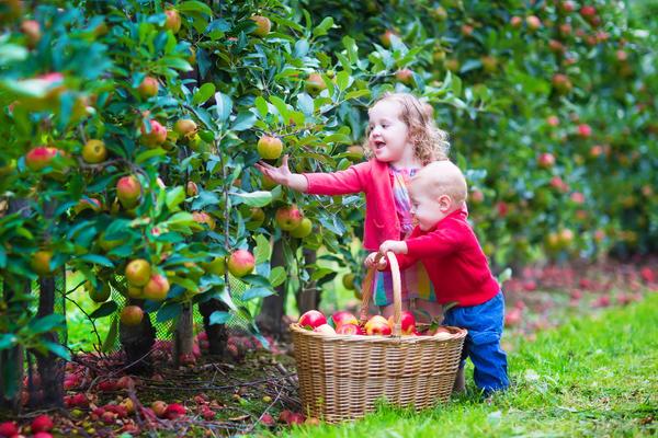 Закладывая собственный сад, мы ориентируемся, в первую очередь, на вкусы и потребности членов своей семьи