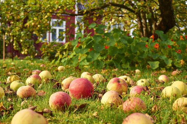 В идеале - закладывать новый сад, продолжая использовать преимущества старого