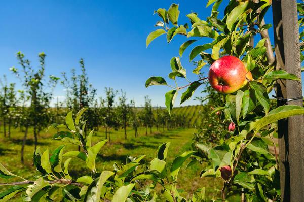Правильное место и правильные деревья - основа хорошего сада