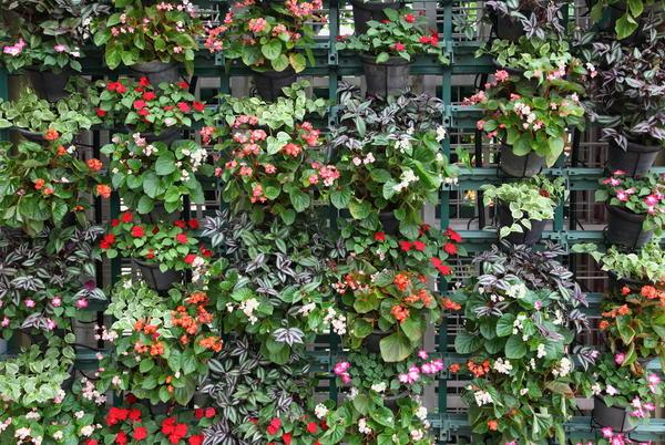 Цветущая стена