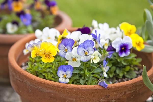 Контейнеры и цветы - основные материалы для строительства контейнерного садика.