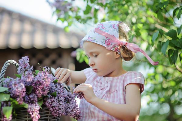 Цветки сирени надо сначала собрать