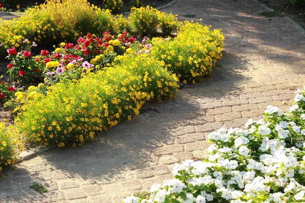 Сделайте вашей дорожке декоративный бордюр из цветов