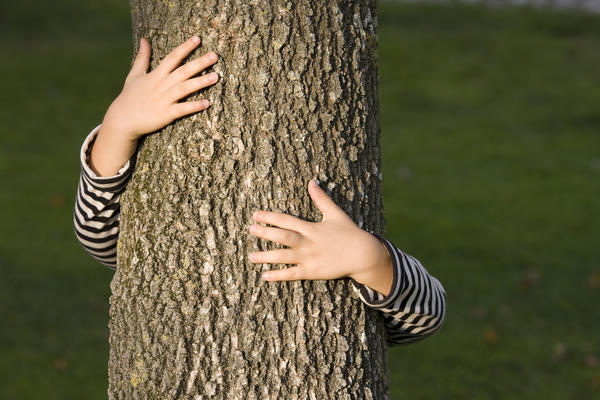 Обнимая дерево