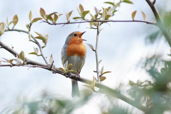 Особенно растениям нравится щебетание птиц и классическая музыка.