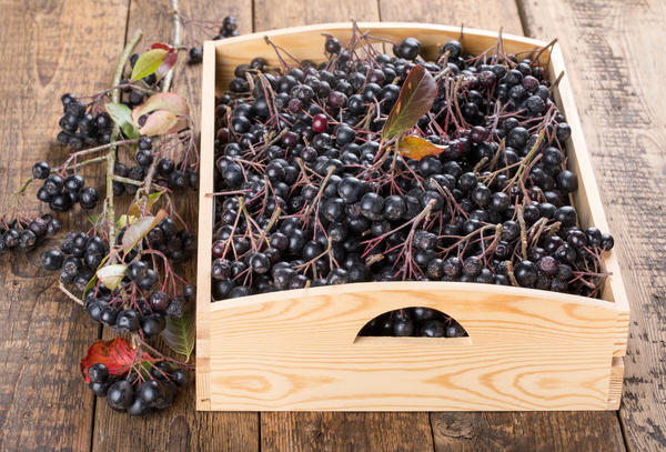 Что сделать из черноплодной рябины на зиму