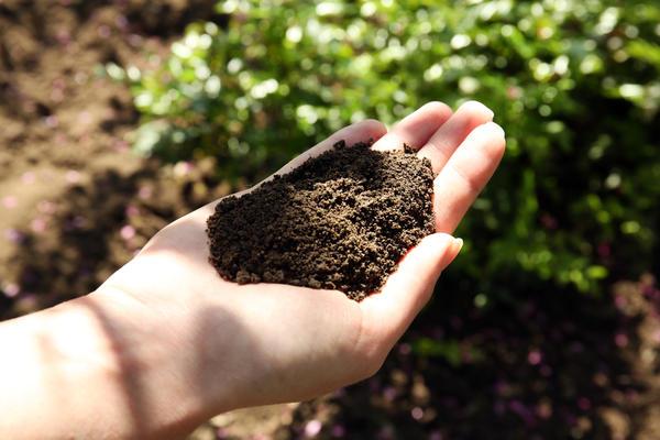 Большинство огородников мечтают видеть у себя почву насыщенного черного цвета