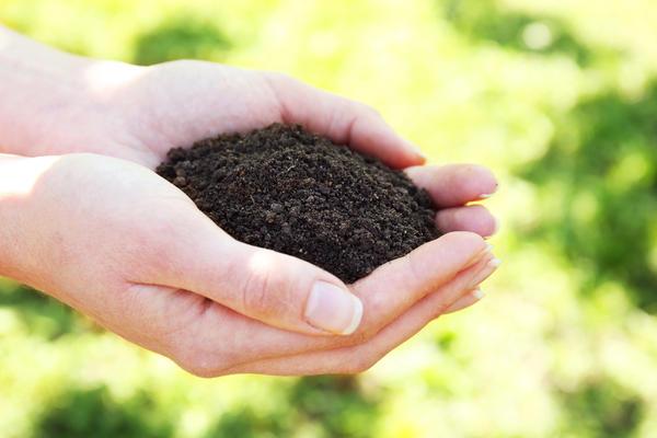 Чтобы нестабильный гумус превращался в сложные стабильные углеродистые соединения, нужны новые почвенные катализаторы