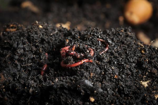 Пройдя все пищевые цепочки почвы, органика превратится в гумус.