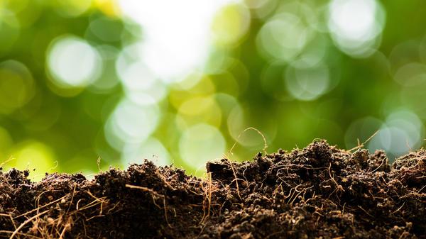 В почве создается особый набор микроорганизмов, появляются марганцевые активные бактерии, это ускоряет почвообразование во много раз, и накапливается долгоиграющий стабильный гумус
