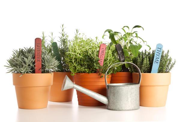 Большинству растений вредна и засуха, и избыток влаги