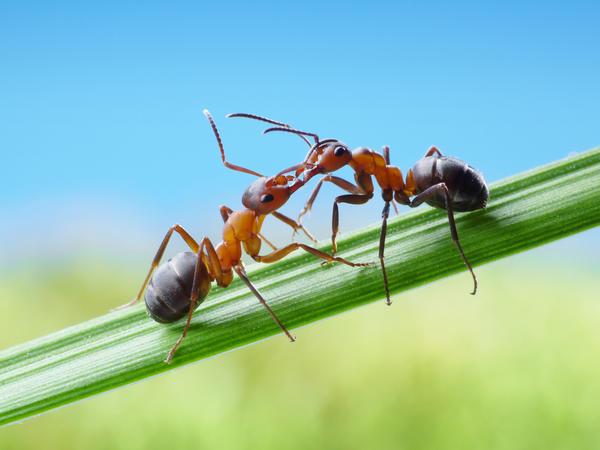 А еще насекомые постоянно кормят и облизывают друг друга