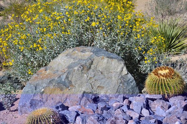 Центром аренария может стать крупный, отличающийся от всех остальных, камень, причудливой формы коряга, приметное растение или даже малая архитектурная форма.