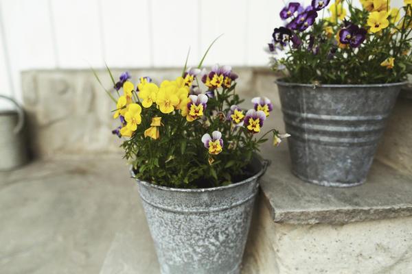 Горшки для растений из ведер