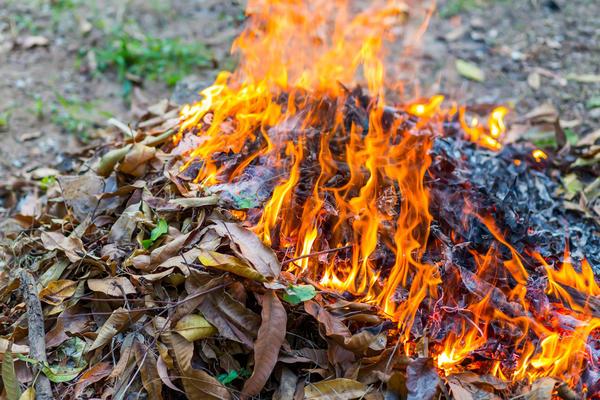 Обычно теплые гряды делают весной из горящего навоза
