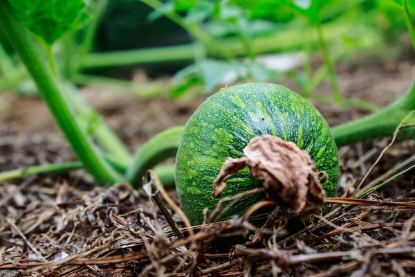 Весной садовода и огородника радует каждый новый росток, новый листочек и лепесточек