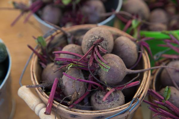На хранение отбирают здоровые корнеплоды