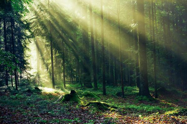 Видимая часть солнечного излучения - это свет, воспринимаемый человеческим глазом