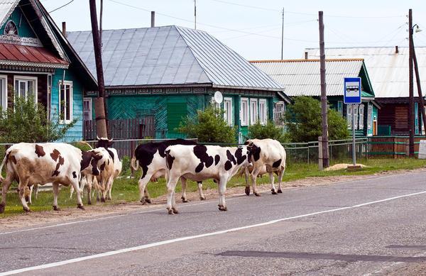 Сельский быт может существенно отличаться от привычного городского