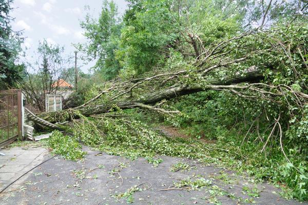 Проблемы, связанные с сильным ветром, из года в год беспокоят дачников