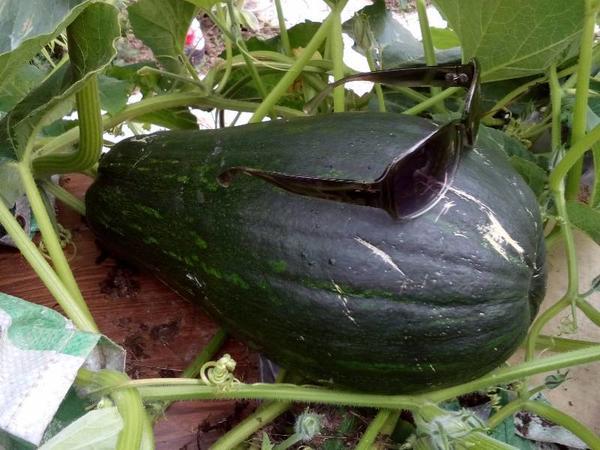 неизвестный овощ
