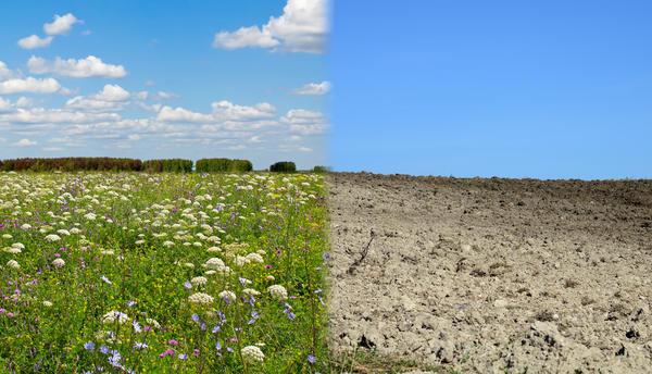 Растения гораздо больше людей знают о состоянии почвы