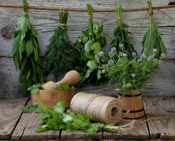 Петрушка, укроп, сельдерей - пряные травы, отлично дополняющие многие блюда