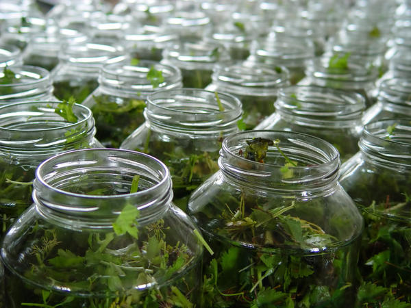 Еще один способ запастись зеленью на зиму - законсервировать ее