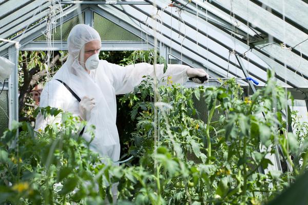 Использование пестицида в тепличном хозяйстве