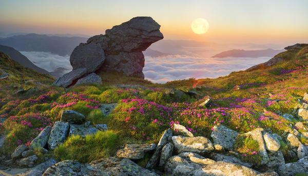 Пейзаж на горе Поп-Иван, Карпаты. Дикие рододендроны среди скал и камней