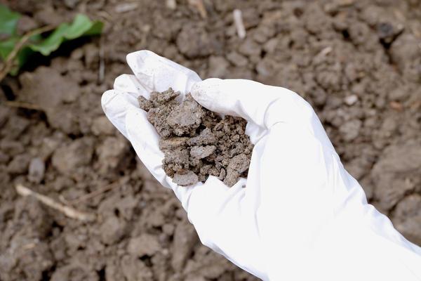 Чаще всего проблема в том, что почва на вашем участке не подходит конкретным растениям