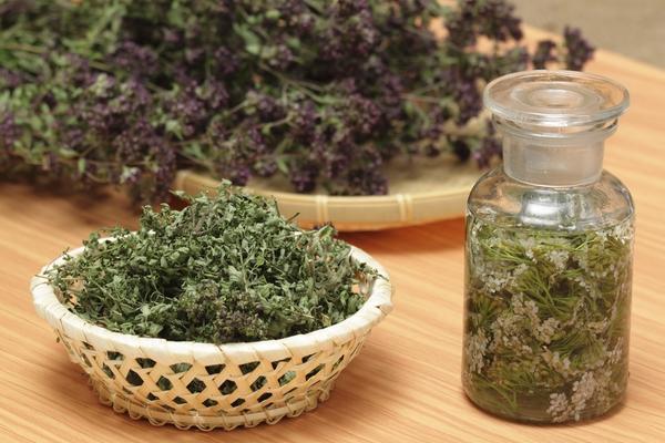Душица - лекарственное растение